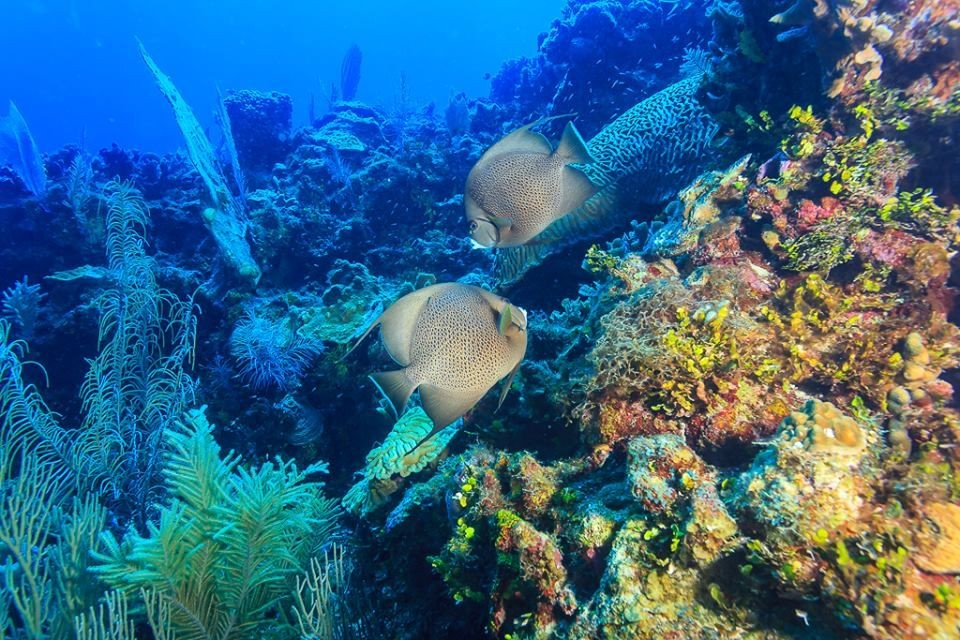 Wonder abounds while diving Belize!