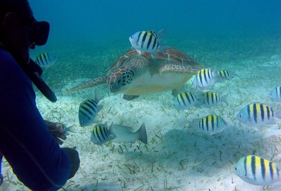 Incredible experiences - Diving - St. George's Caye Resort Belize